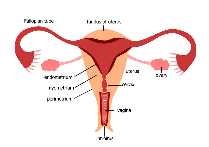 womb cancer uterus